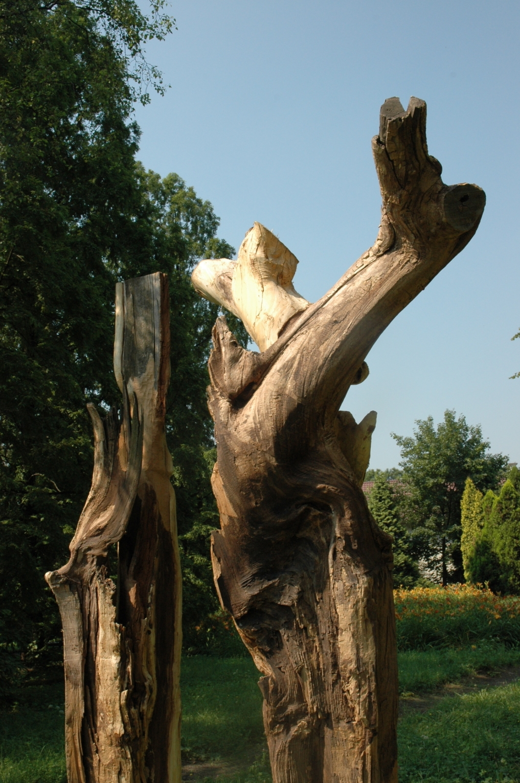Nature's Body, 2006, dimensions variable (height 3.5 meters), Apple Wood, Botanic Gardens, Krakow, Poland (detail)